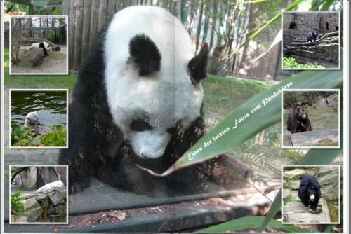 1705 Zoo Bären