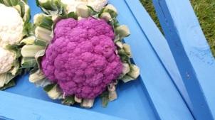 0709 Blumenkohl lila 1