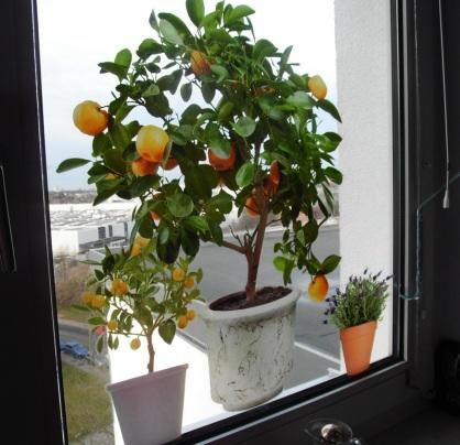 2912 Orange Mandarinen