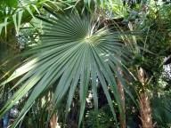 0504 Botan Garten 1