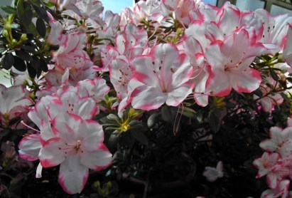 0504 Botan Garten 2