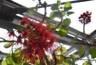 0504 Botan Garten 3