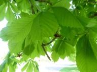 2105 Britzer Garten Baum Makro