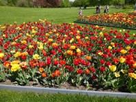 2105 Britzer Garten Tulpen 89