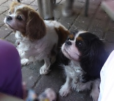 2505 Hunde 513