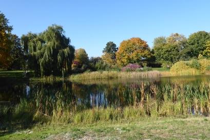 2910 BG Landschaft Herbst 277