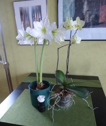 1501 amaryllis w orchideen 858