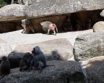 0408 2007 Zoo Affen 2