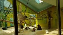 0408 2007 Zoo Affen 4