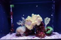 0408 2007 Zoo Aquarium 4