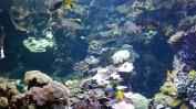 0408 2007 Zoo Aquarium 6
