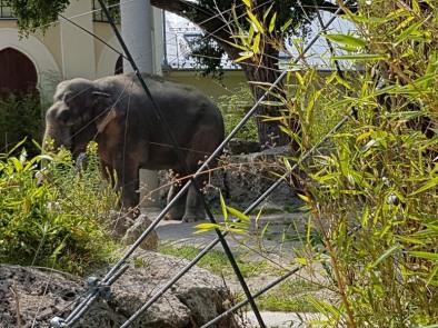 0408 2007 Zoo Elefanten 1