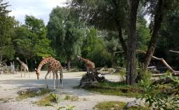0408 2007 Zoo Giraffen 2