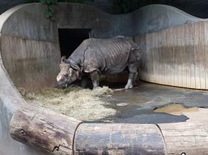 0408 2007 Zoo Nashorn ohne Horn
