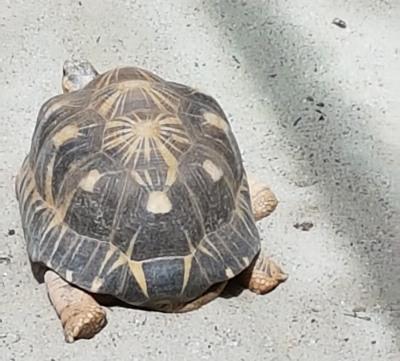 0408 2007 Zoo Schildkröten 2