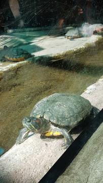0408 2007 Zoo Schildkröten 3