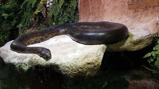 0408 2007 Zoo Schlange 1