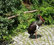 0408 2007 Zoo Vogelgehege 4