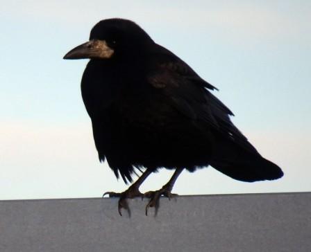 2601 Vögel 190