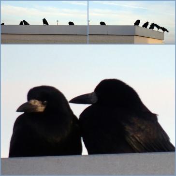 2601 Vogelcollage