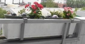 0804 05 Balkonkästen 72