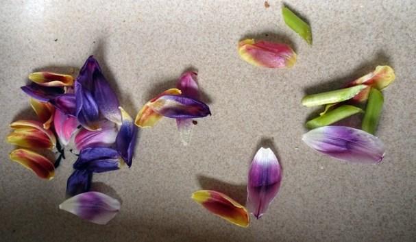 1204 Tulpen 20