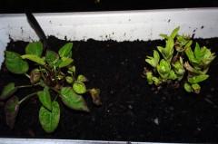 2107 Pflanzen 4