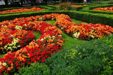 0809 Blumen 1508 1