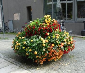 0809 Blumen 1808 1
