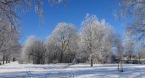 0102 Schneeparkbäume 11