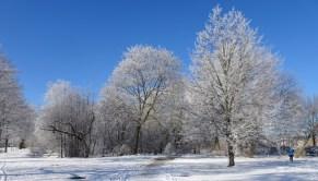 0102 Schneeparkbäume 12