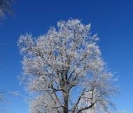 0102 Schneeparkbäume 23