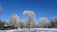 0102 Schneeparkbäume 422