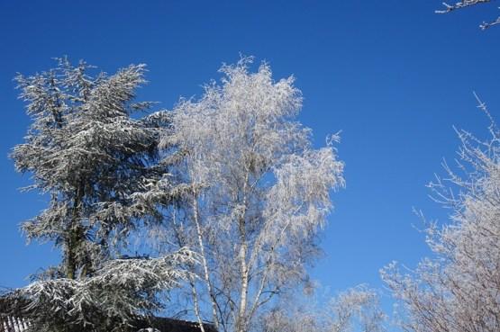 0102 Schneeparkbäume 426