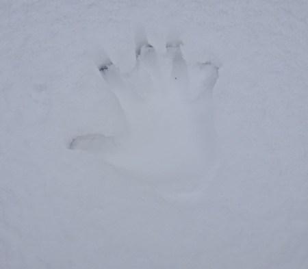 0102 Spuren im Schnee 96