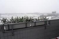 0802 Schnee 3