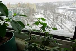 0802 Schnee 4