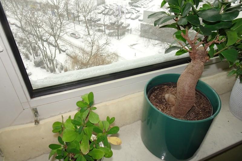 0802 Schnee 5