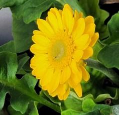 2207 Balk Blume 3
