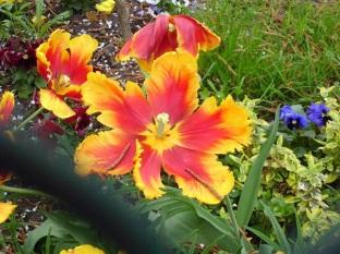 2207 Blumen verblüht